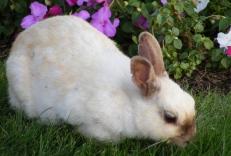 Creamy Bunny