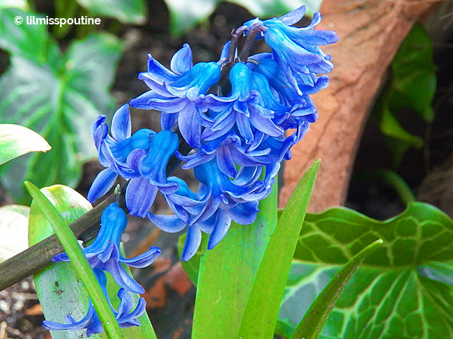 Blue Bellbottom Flowers