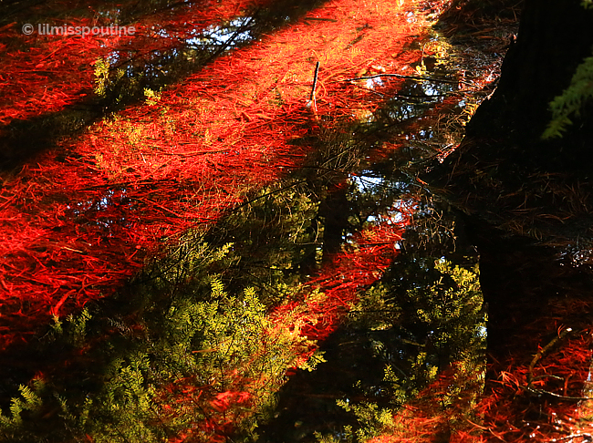 Red-and-Green-Reflections